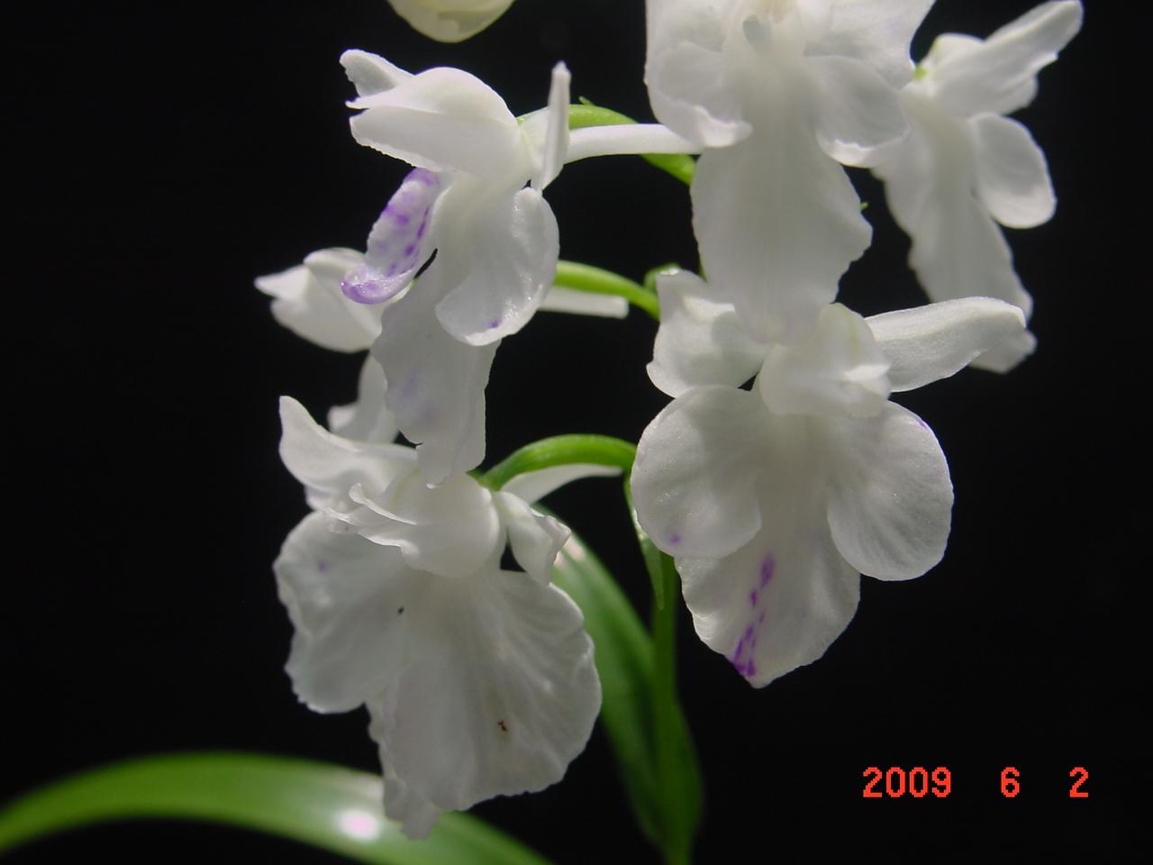 20096_019