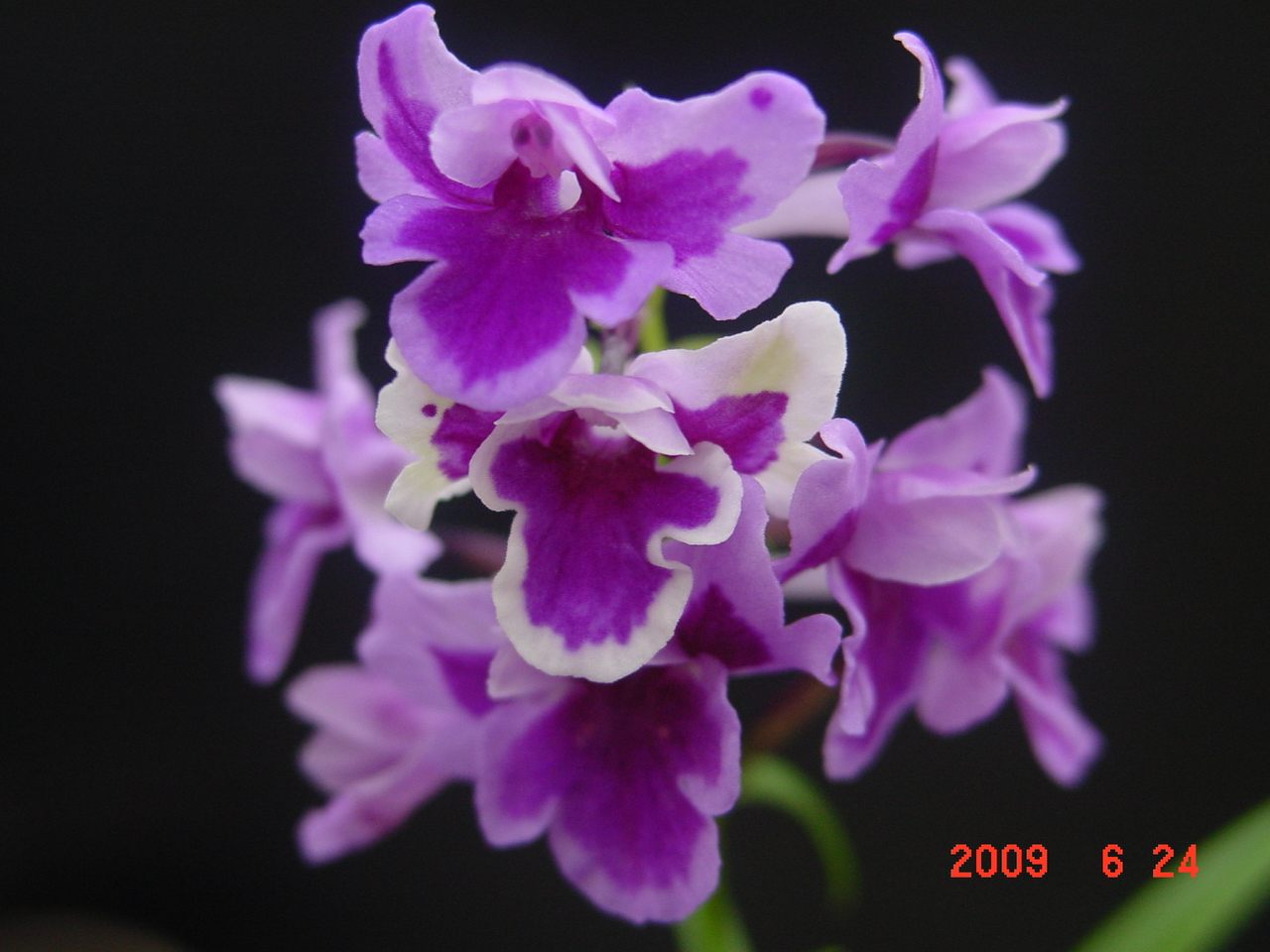 20096_222