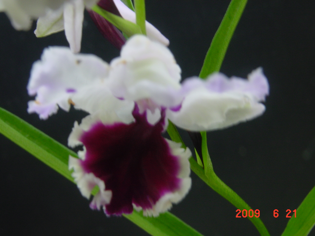 20096_193