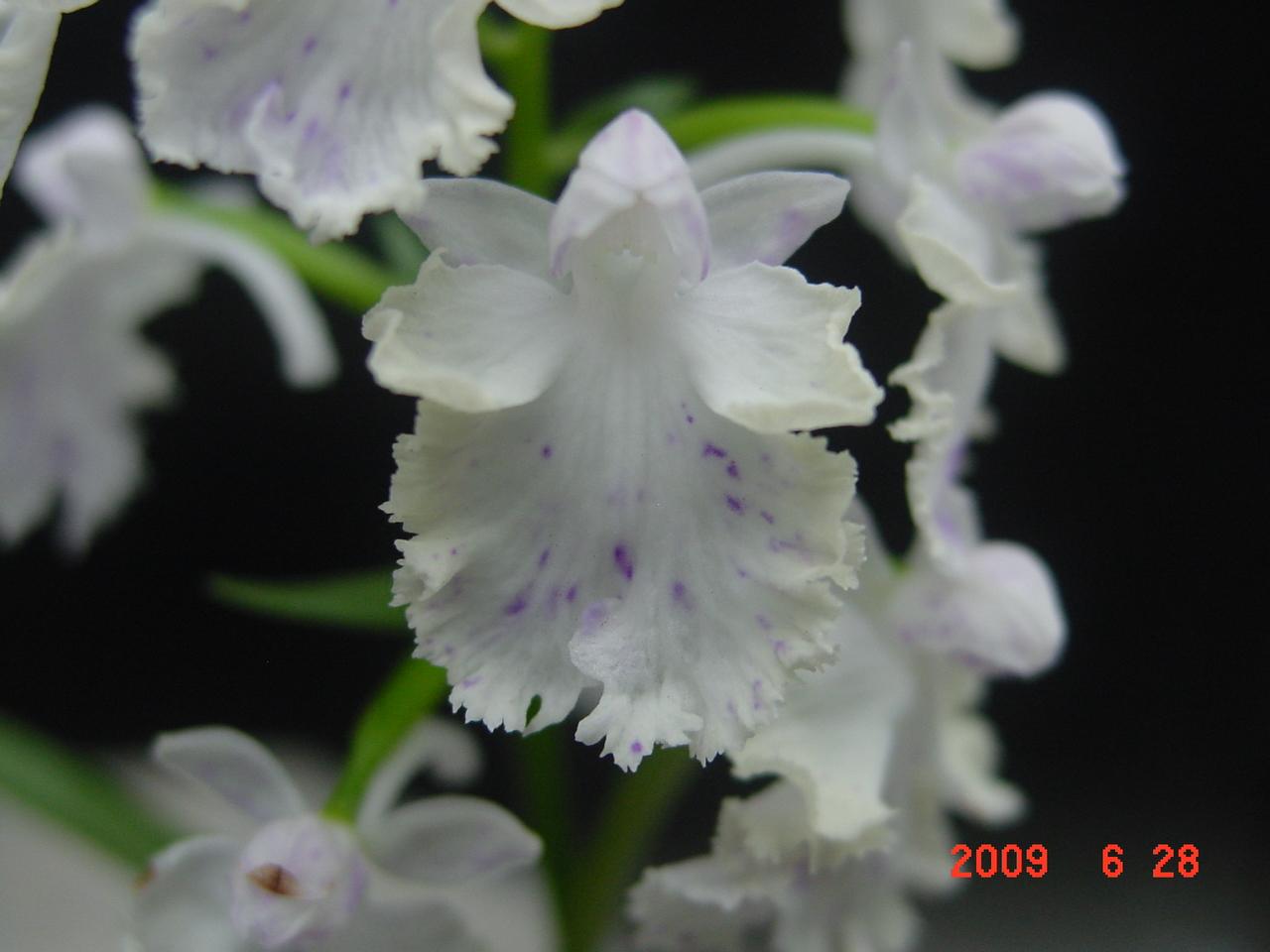20096_290